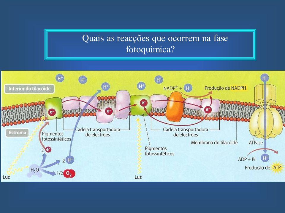 A hidrólise do ATP é uma reacção exergónica.