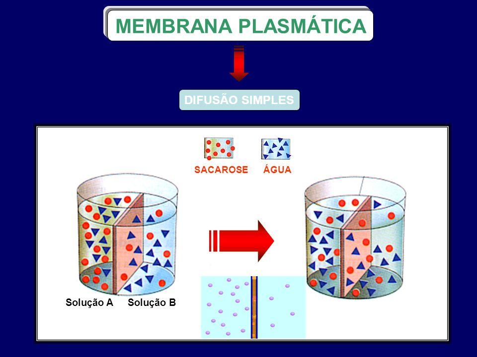 DIFUSÃO SIMPLES MEMBRANA PLASMÁTICA ÁGUASACAROSE Solução ASolução B