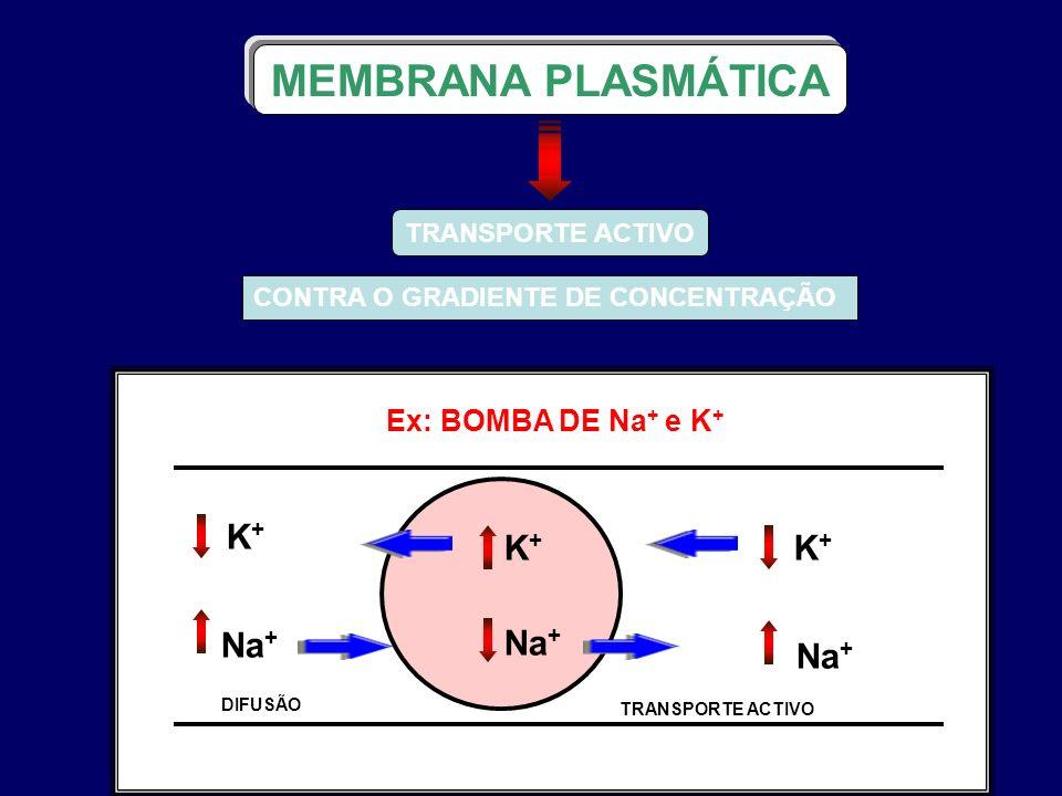 Ex: BOMBA DE Na + e K + TRANSPORTE ACTIVO CONTRA O GRADIENTE DE CONCENTRAÇÃO MEMBRANA PLASMÁTICA K+K+ Na + K+K+ K+K+ DIFUSÃO TRANSPORTE ACTIVO