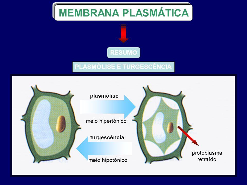 RESUMO plasmólise meio hipertónico turgescência meio hipotónico protoplasma retraído PLASMÓLISE E TURGESCÊNCIA MEMBRANA PLASMÁTICA