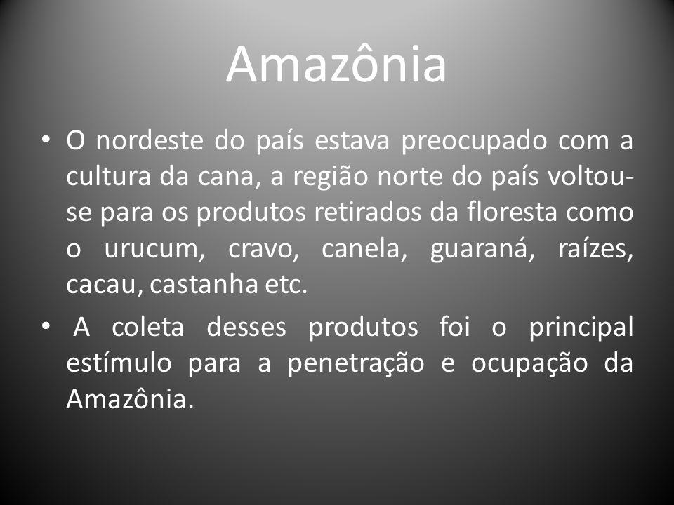 Amazônia O nordeste do país estava preocupado com a cultura da cana, a região norte do país voltou- se para os produtos retirados da floresta como o u
