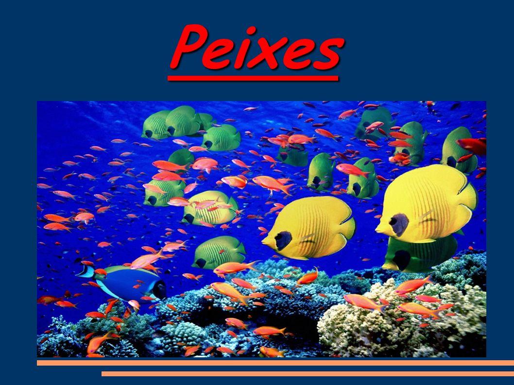 Aquarela marinha Seja na água doce, seja nos mares, os peixes exibem uma variedade de cores.