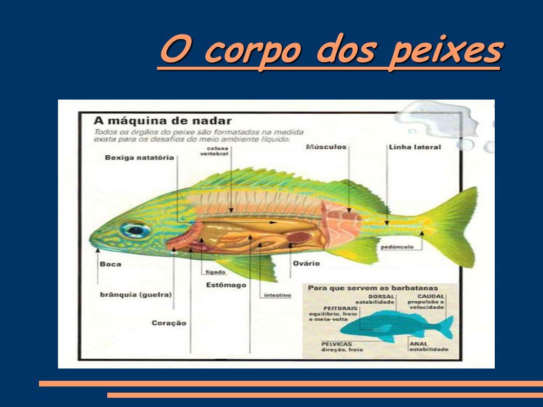 Formas A maioria dos peixes apresenta uma forma hidrodinâmica típica.