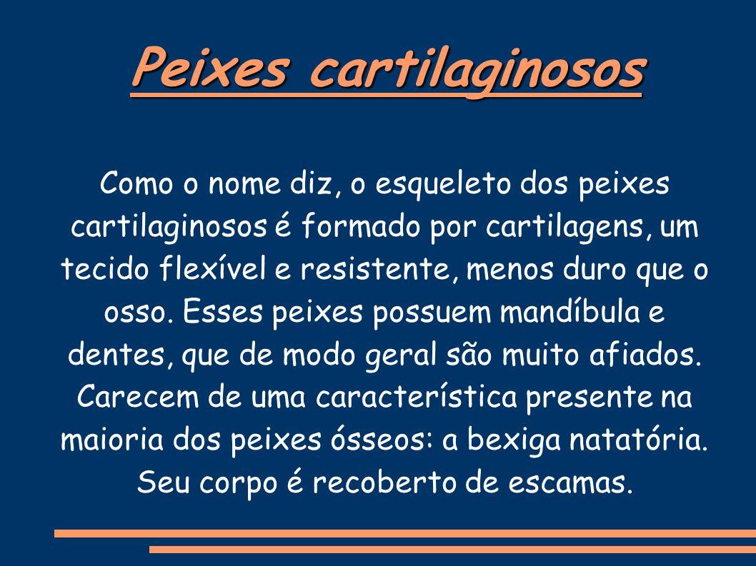 Peixes cartilaginosos Como o nome diz, o esqueleto dos peixes cartilaginosos é formado por cartilagens, um tecido flexível e resistente, menos duro que o osso.