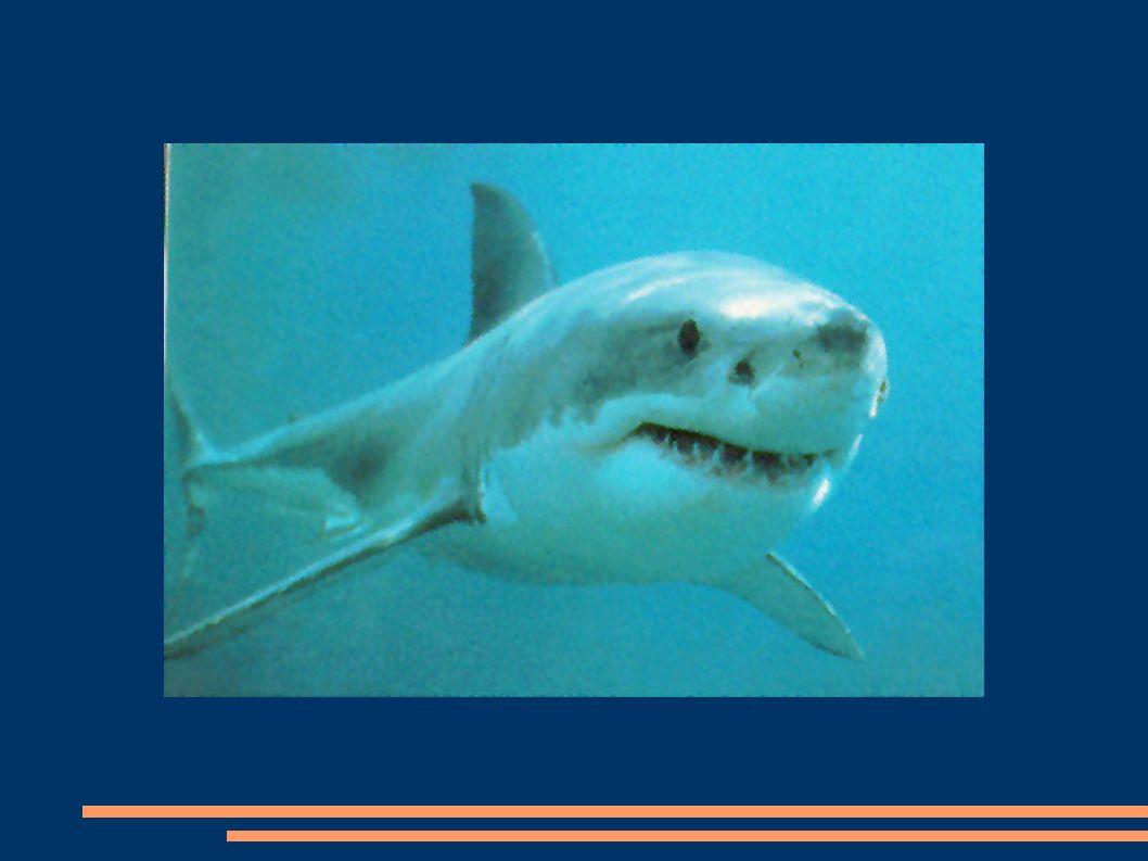 Barbatanas Tipicamente, os peixes apresentam os seguintes tipos de barbatanas: -uma barbatana dorsal -uma barbatana anal -uma barbatana caudal -um par de barbatanas ventrais (ou barbatanas pélvicas) -um par de barbatanas peitorais.