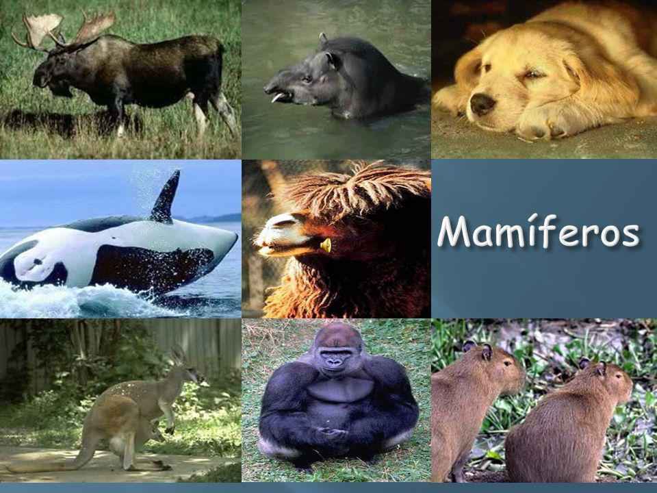 Mamíferos Mamíferos