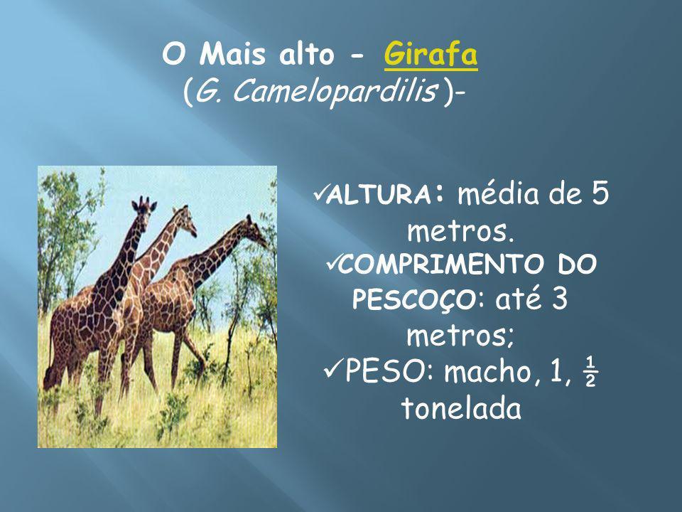 O Mais alto - GirafaGirafa (G. Camelopardilis )- ALTURA : média de 5 metros. COMPRIMENTO DO PESCOÇO : até 3 metros; PESO: macho, 1, ½ tonelada