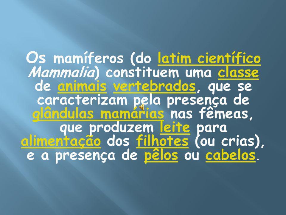Os mamíferos (do latim científico Mammalia) constituem uma classe de animais vertebrados, que se caracterizam pela presença de glândulas mamárias nas