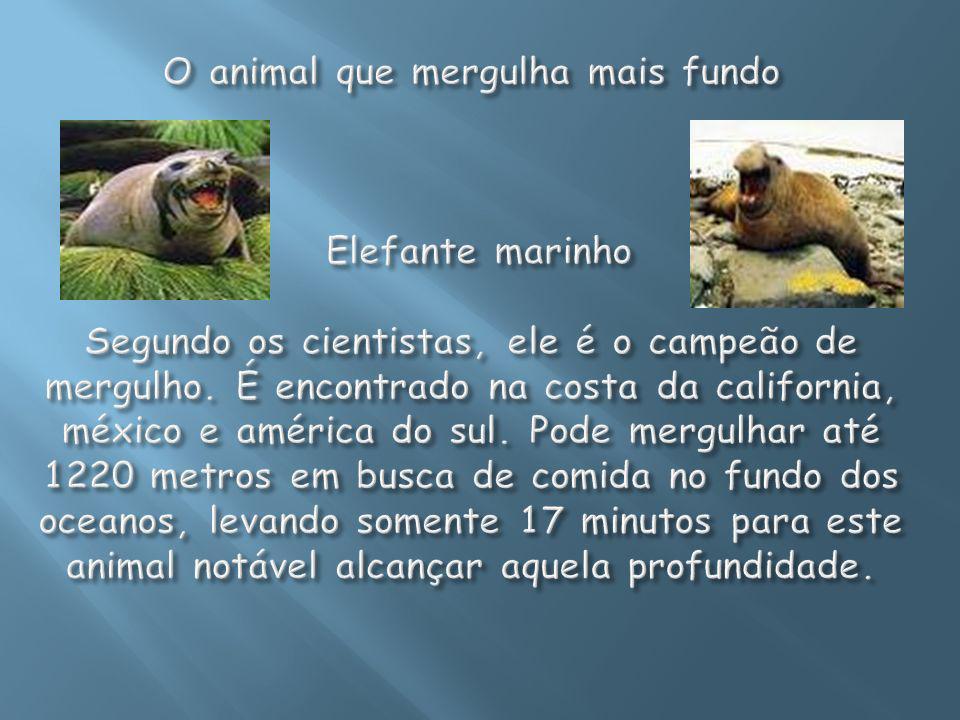 DISTRIBUIÇÃO GEOGRÁFICA: Os mamíferos estão distribuídos em praticamente todas as regiões do globo.