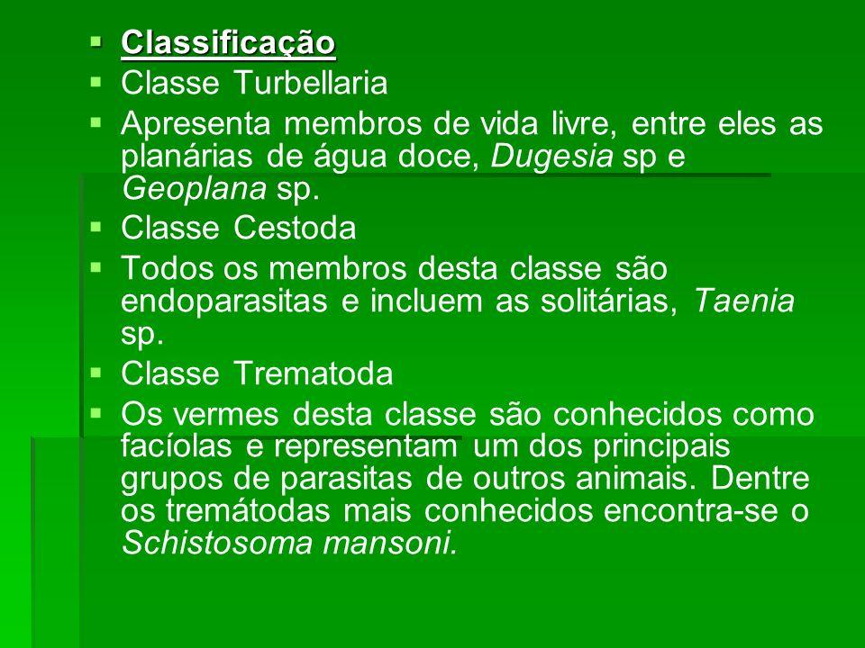 Classificação Classificação Classe Turbellaria Apresenta membros de vida livre, entre eles as planárias de água doce, Dugesia sp e Geoplana sp. Classe