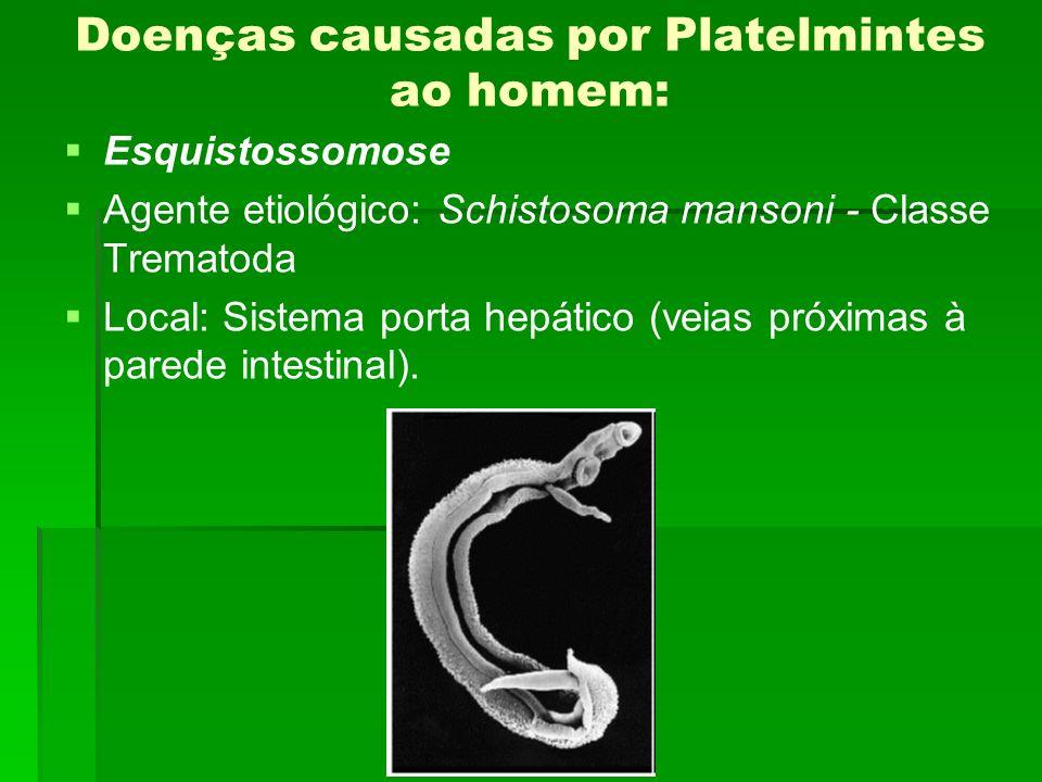 Doenças causadas por Platelmintes ao homem: Esquistossomose Agente etiológico: Schistosoma mansoni - Classe Trematoda Local: Sistema porta hepático (v