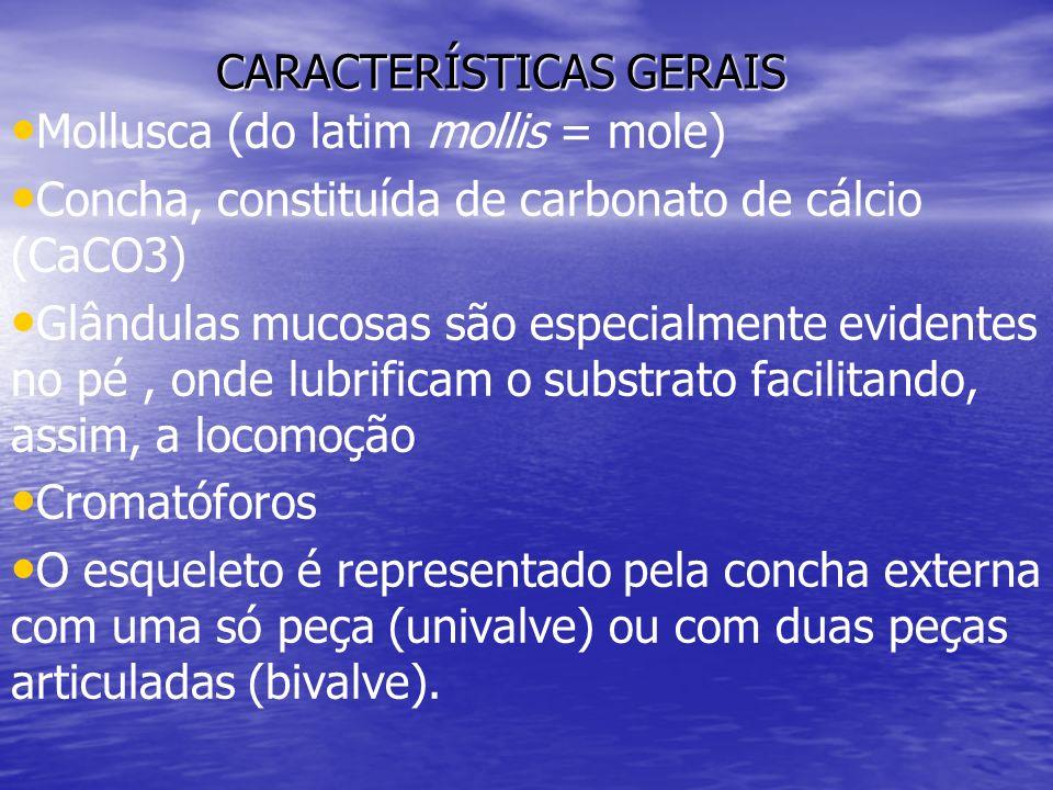 CARACTERÍSTICAS GERAIS Mollusca (do latim mollis = mole) Concha, constituída de carbonato de cálcio (CaCO3) Glândulas mucosas são especialmente eviden