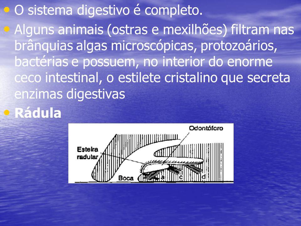 O sistema digestivo é completo. Alguns animais (ostras e mexilhões) filtram nas brânquias algas microscópicas, protozoários, bactérias e possuem, no i
