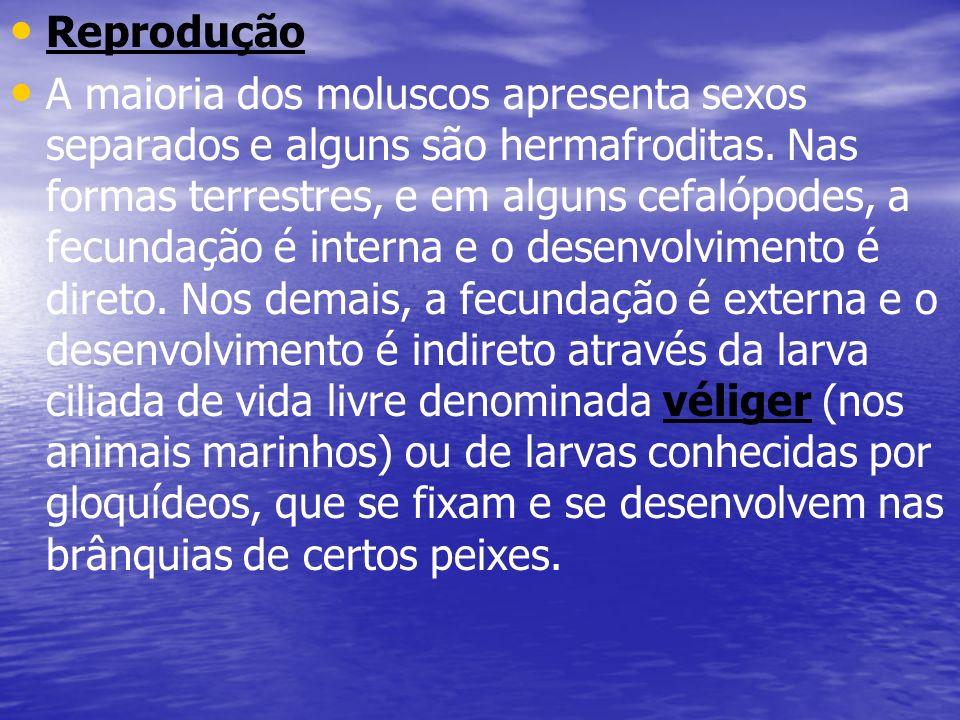 Reprodução A maioria dos moluscos apresenta sexos separados e alguns são hermafroditas. Nas formas terrestres, e em alguns cefalópodes, a fecundação é