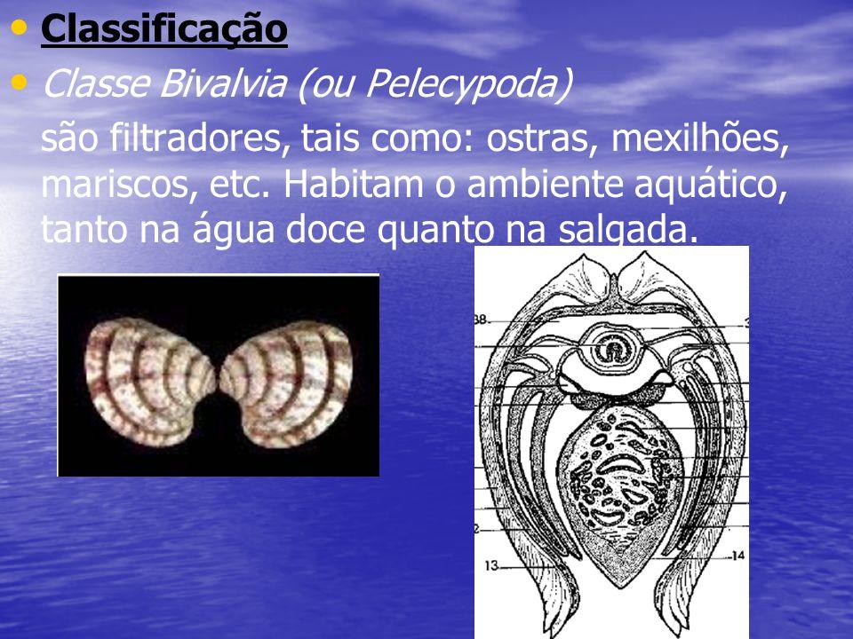Classificação Classe Bivalvia (ou Pelecypoda) são filtradores, tais como: ostras, mexilhões, mariscos, etc. Habitam o ambiente aquático, tanto na água