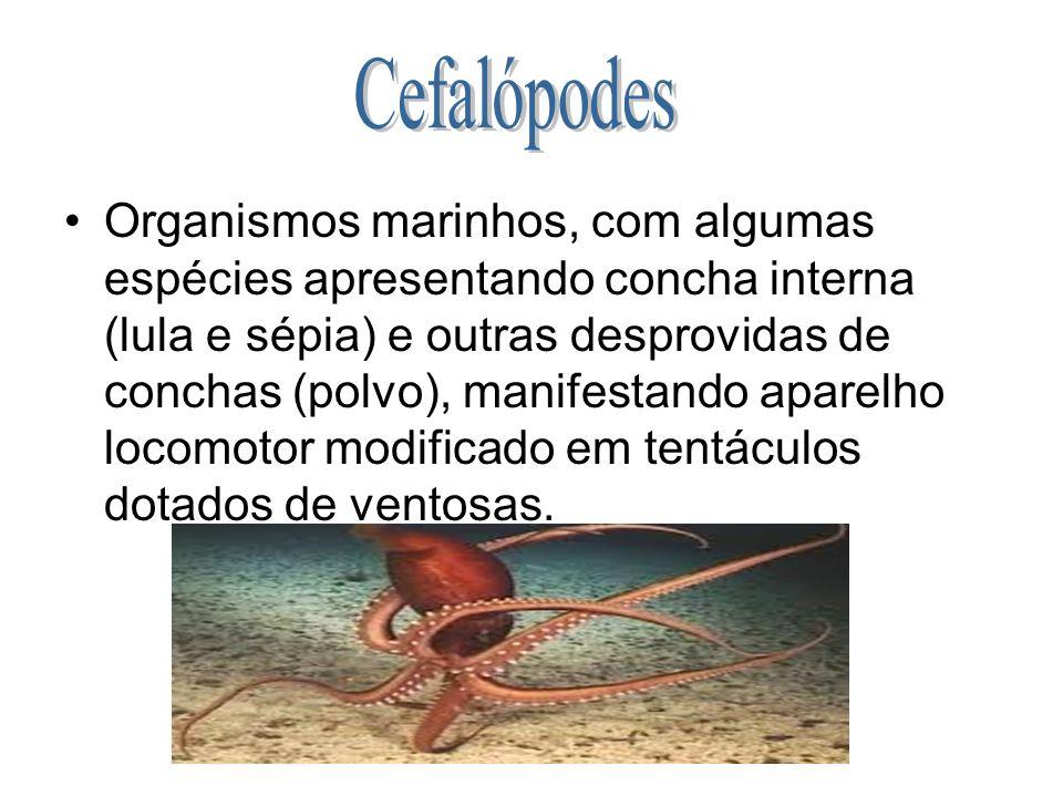 Organismos marinhos, com algumas espécies apresentando concha interna (lula e sépia) e outras desprovidas de conchas (polvo), manifestando aparelho lo