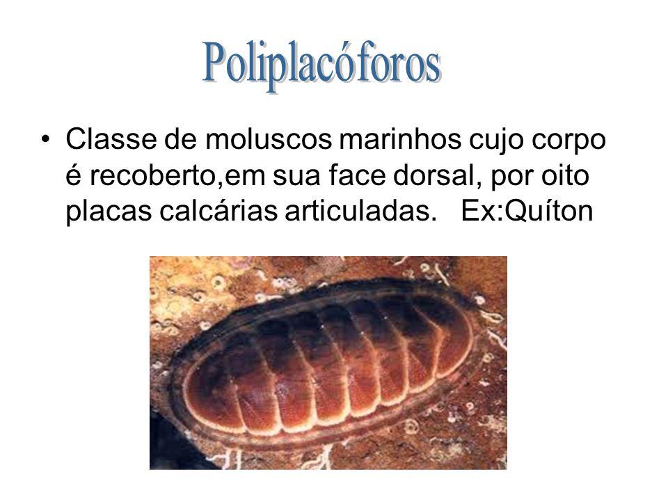 Classe de moluscos marinhos cujo corpo é recoberto,em sua face dorsal, por oito placas calcárias articuladas. Ex:Quíton