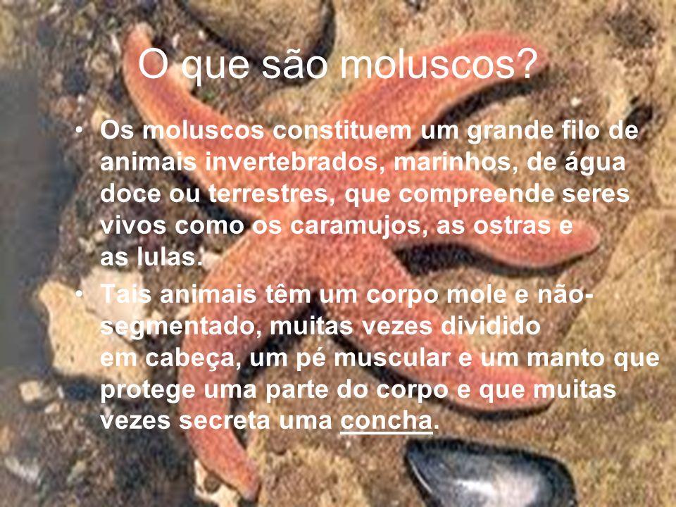 O que são moluscos? Os moluscos constituem um grande filo de animais invertebrados, marinhos, de água doce ou terrestres, que compreende seres vivos c