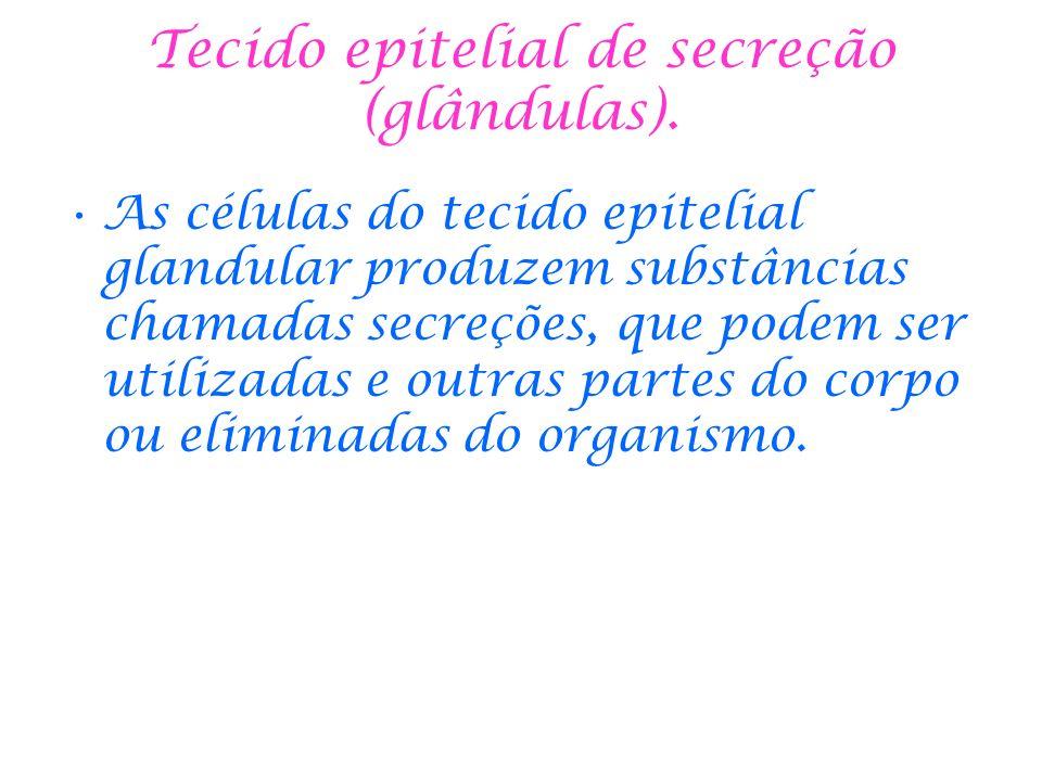 Tecido epitelial de secreção (glândulas). As células do tecido epitelial glandular produzem substâncias chamadas secreções, que podem ser utilizadas e
