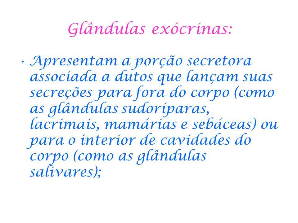 Glândulas exócrinas: Apresentam a porção secretora associada a dutos que lançam suas secreções para fora do corpo (como as glândulas sudoríparas, lacr