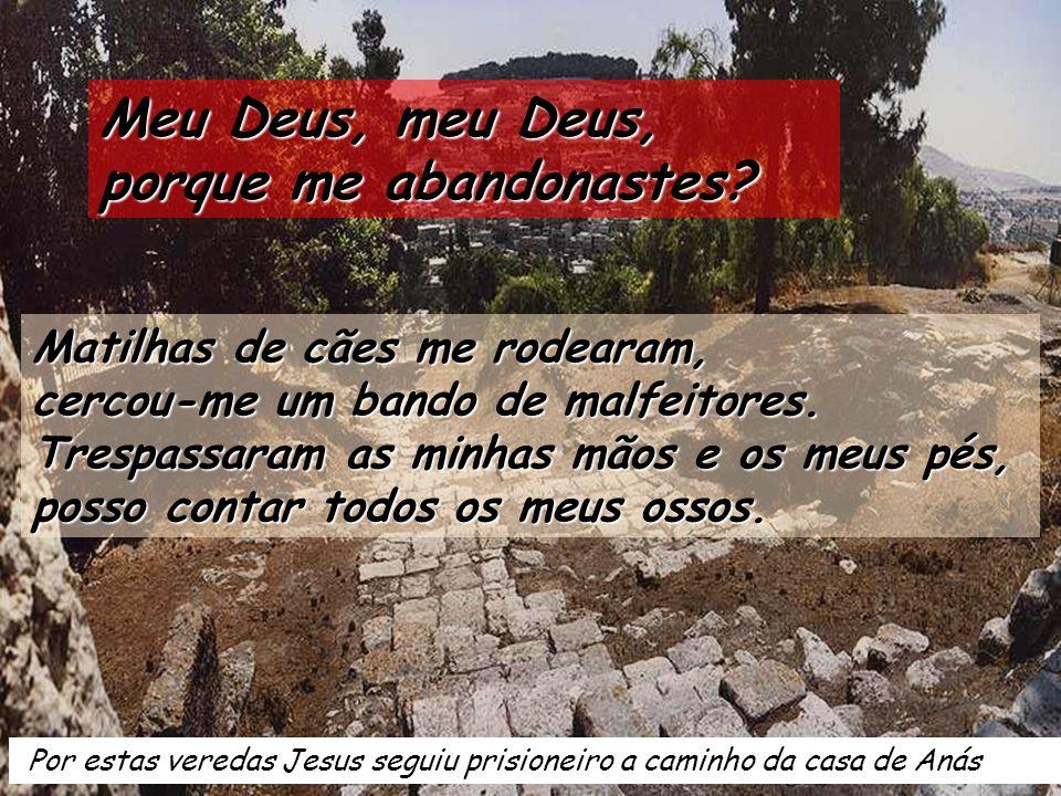 Oliveira milenária, talvez nascida da soca de alguna das que havia neste lugar de Getsémani, que seriam cortadas pelo exército romano depois da revolt