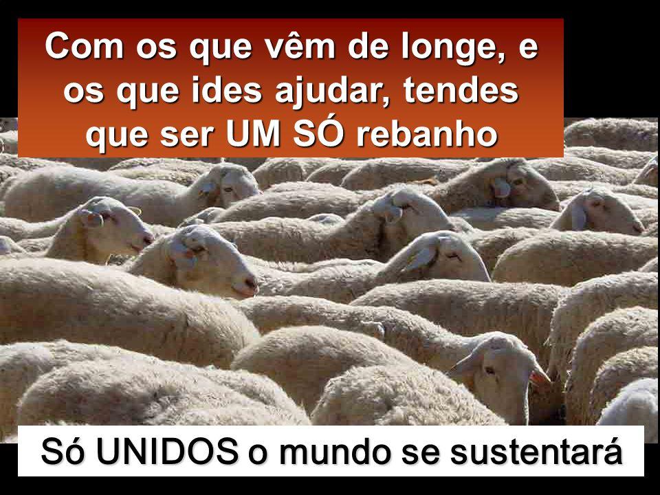 Tenho ainda outras ovelhas que não são deste redil e preciso de as reunir; elas ouvirão a minha voz e haverá um só rebanho e um só Pastor.