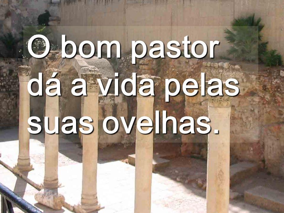 O Pastor está ao serviço das ovelhas. Mesmo que sejam cegas de nascimento, ou pobres... Ainda não entendestes que TODOS sois importantes?