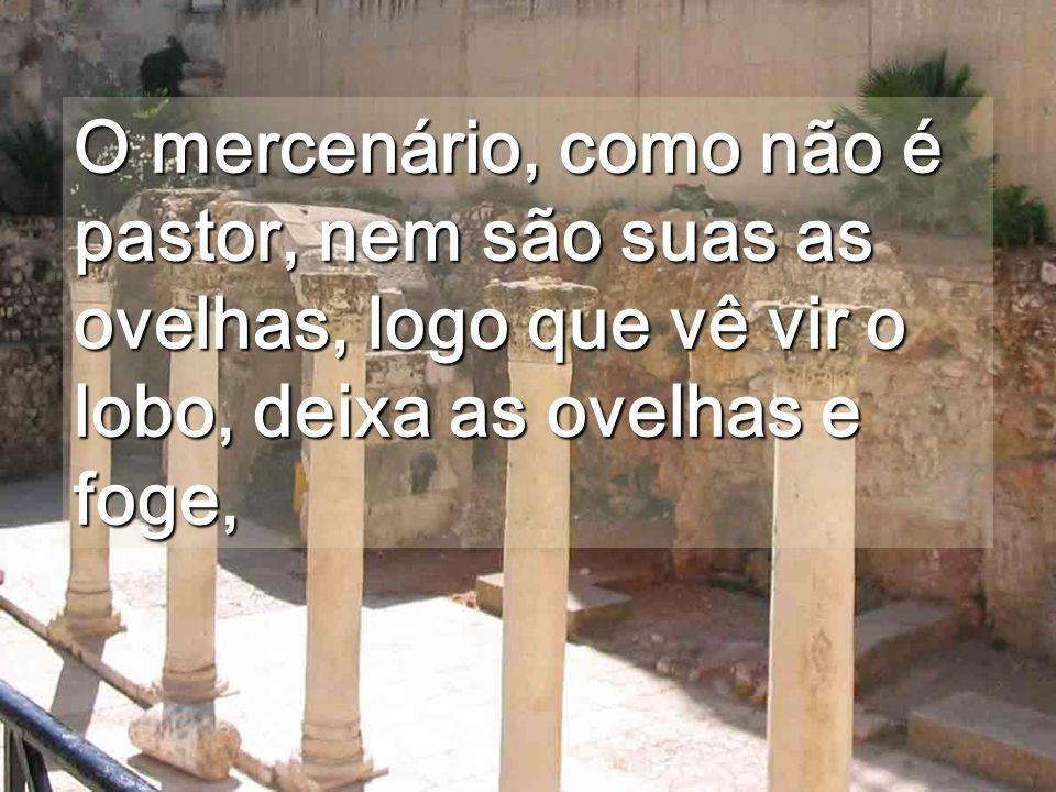 O mercenário, como não é pastor, nem são suas as ovelhas, logo que vê vir o lobo, deixa as ovelhas e foge,