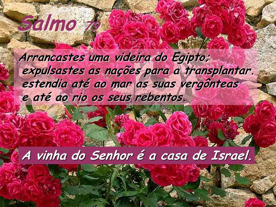 Salmo 79 Arrancastes uma videira do Egipto; Arrancastes uma videira do Egipto; expulsastes as nações para a transplantar.