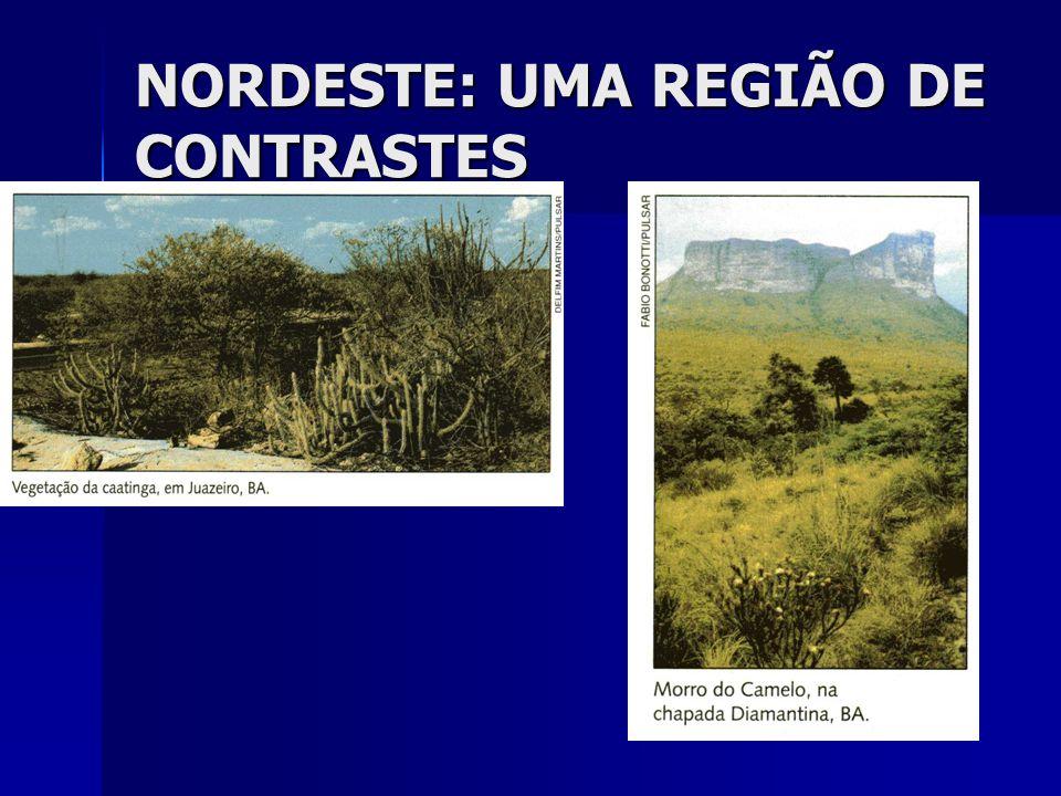 MEIO NORTE É também uma faixa de transição, entre o Sertão e a floresta Amazônica; É também uma faixa de transição, entre o Sertão e a floresta Amazônica; Possui vegetação de floresta e de caatinga; Possui vegetação de floresta e de caatinga; Sua vegetação característica é a mata dos cocais; Sua vegetação característica é a mata dos cocais; Possui características de clima equatorial, quente o ano todo, e com chuvas abundantes, principalmente nas regiões próximas à floresta; Possui características de clima equatorial, quente o ano todo, e com chuvas abundantes, principalmente nas regiões próximas à floresta; Possui também muita carnaúba, vegetal muito utilizado na região; Possui também muita carnaúba, vegetal muito utilizado na região;