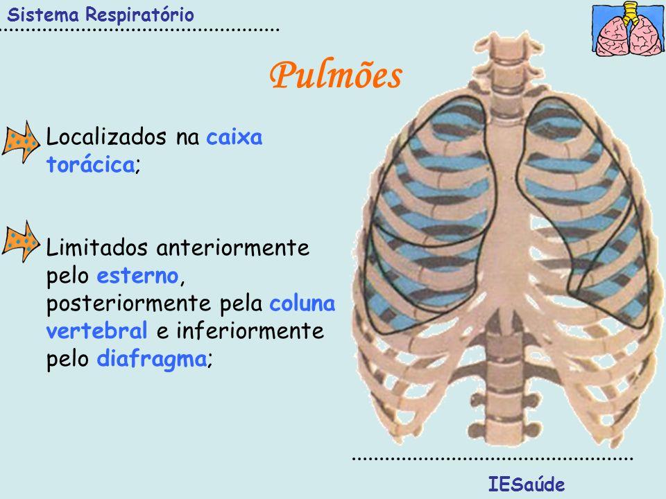 Sistema Respiratório IESaúde Pulmões Localizados na caixa torácica; Limitados anteriormente pelo esterno, posteriormente pela coluna vertebral e infer