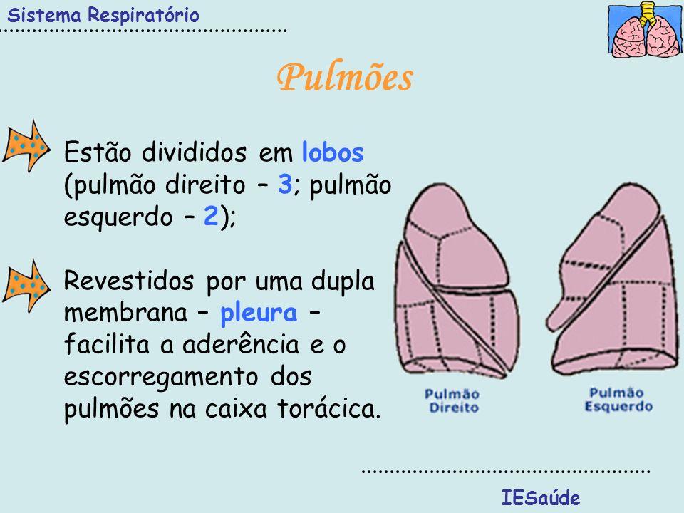 Sistema Respiratório IESaúde Pulmões Estão divididos em lobos (pulmão direito – 3; pulmão esquerdo – 2); Revestidos por uma dupla membrana – pleura –