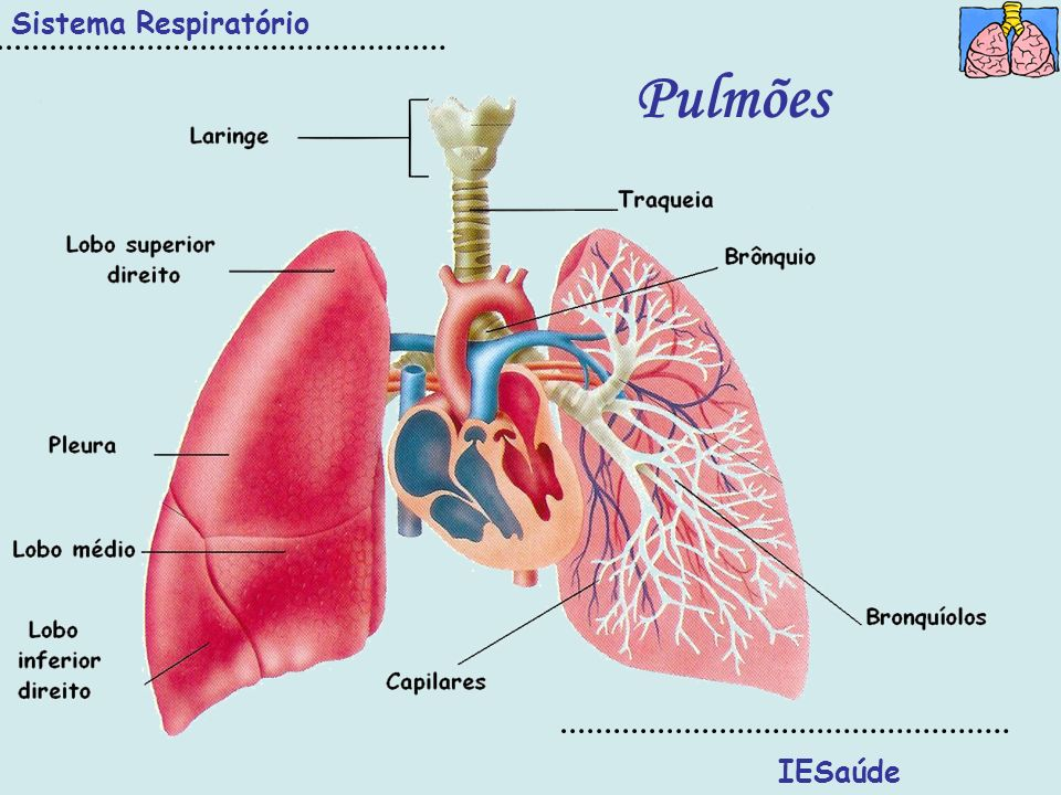 IESaúde Sistema Respiratório Pulmões