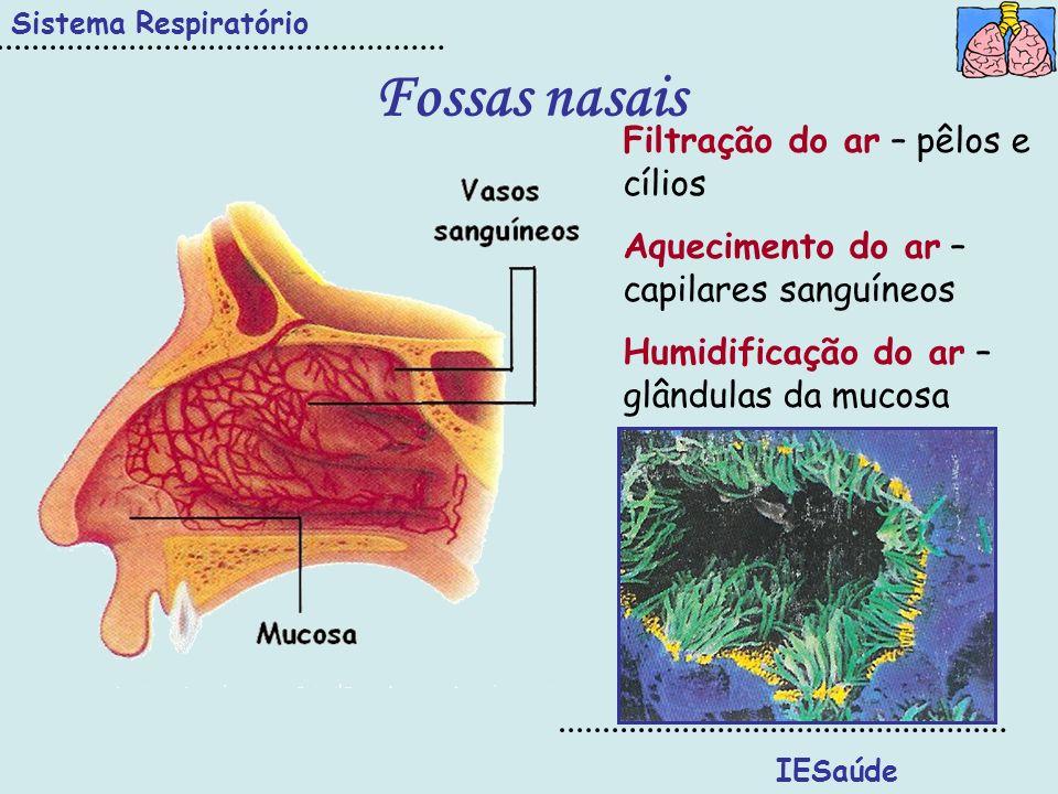 Fossas nasais Sistema Respiratório IESaúde Filtração do ar – pêlos e cílios Aquecimento do ar – capilares sanguíneos Humidificação do ar – glândulas d