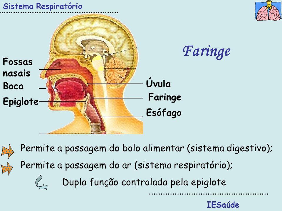 IESaúde Sistema Respiratório Faringe Úvula Faringe Epiglote Boca Fossas nasais Esófago Permite a passagem do bolo alimentar (sistema digestivo); Permi