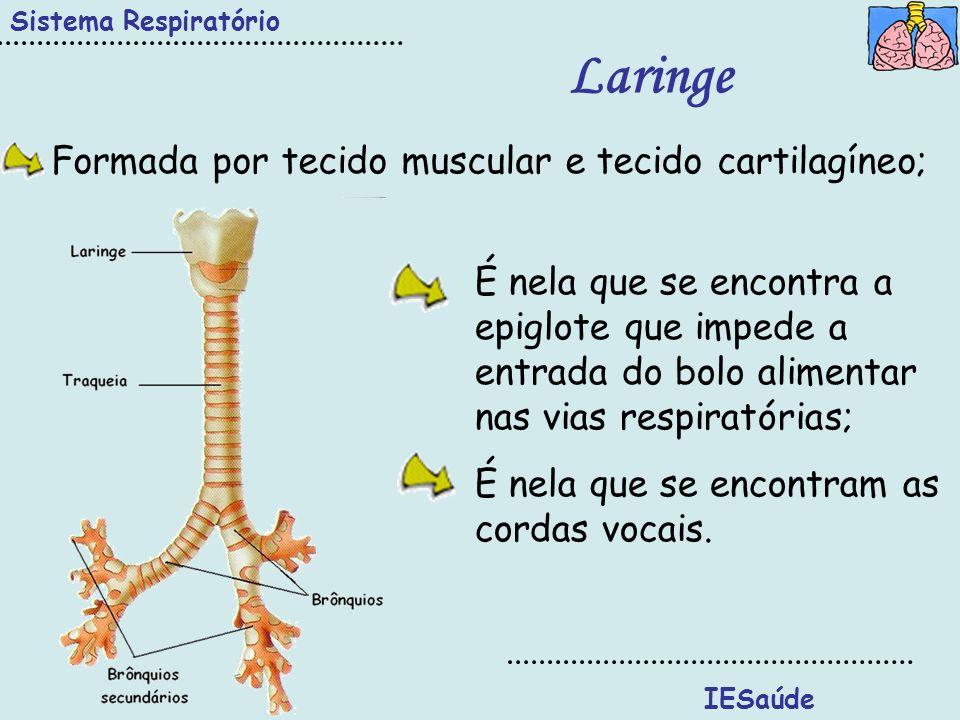 IESaúde Sistema Respiratório Traqueia Situa-se à frente do esófago; Constituída por anéis de cartilagem incompletos na parte posterior; Revestida por glândulas produtoras de muco (humidificação) e células ciliadas (filtração).