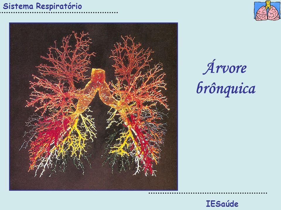 Sistema Respiratório IESaúde Árvore brônquica