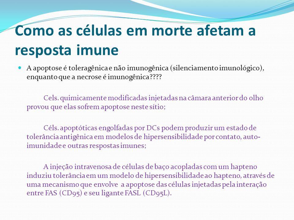 Como as células em morte afetam a resposta imune A apoptose é toleragênica e não imunogênica (silenciamento imunológico), enquanto que a necrose é imu