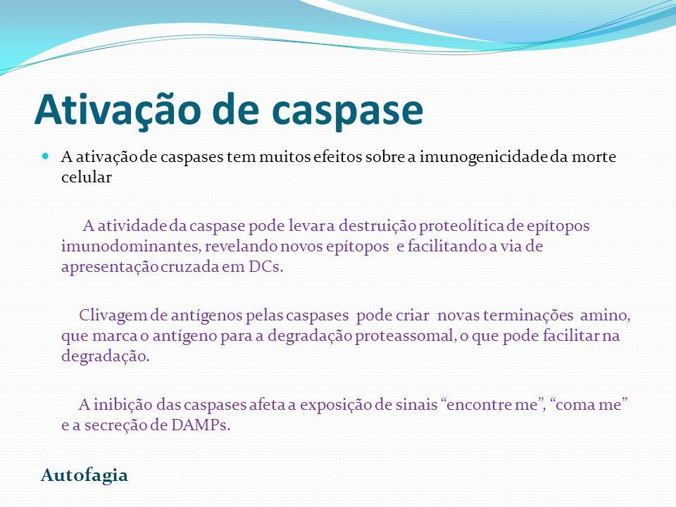 Ativação de caspase A ativação de caspases tem muitos efeitos sobre a imunogenicidade da morte celular A atividade da caspase pode levar a destruição