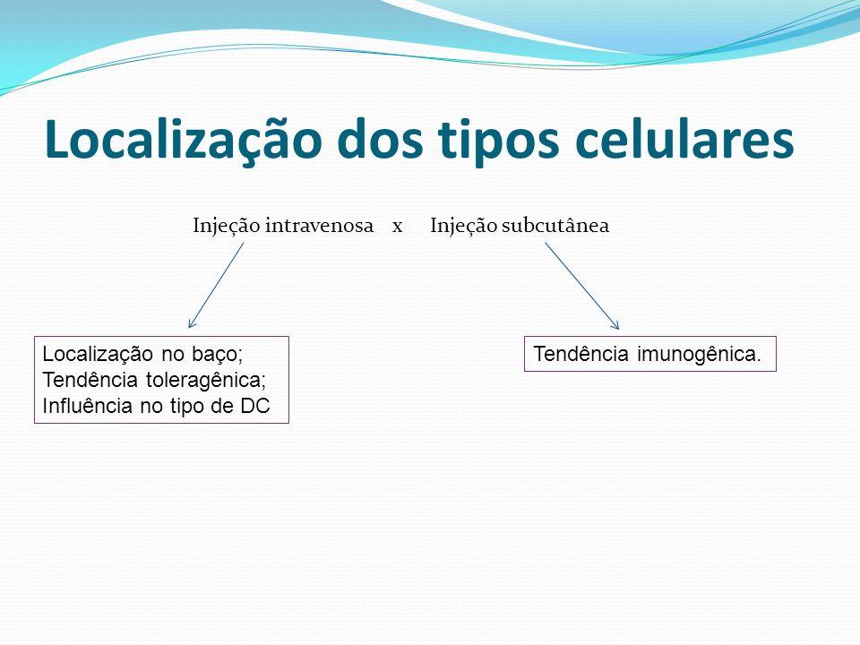 Localização dos tipos celulares Injeção intravenosa x Injeção subcutânea Localização no baço; Tendência toleragênica; Influência no tipo de DC Tendênc