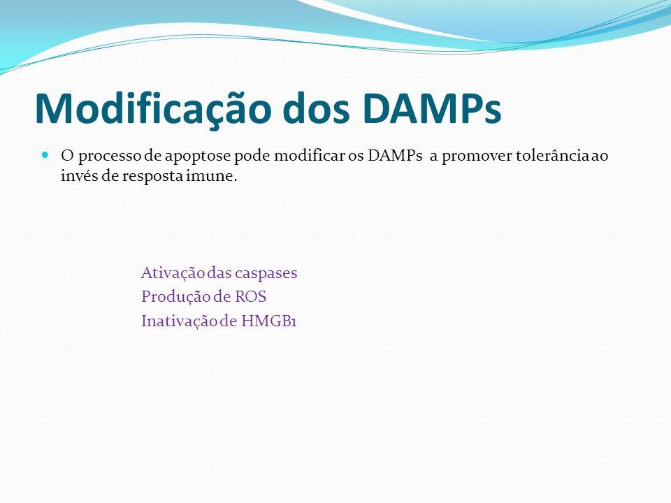 Modificação dos DAMPs O processo de apoptose pode modificar os DAMPs a promover tolerância ao invés de resposta imune. Ativação das caspases Produção