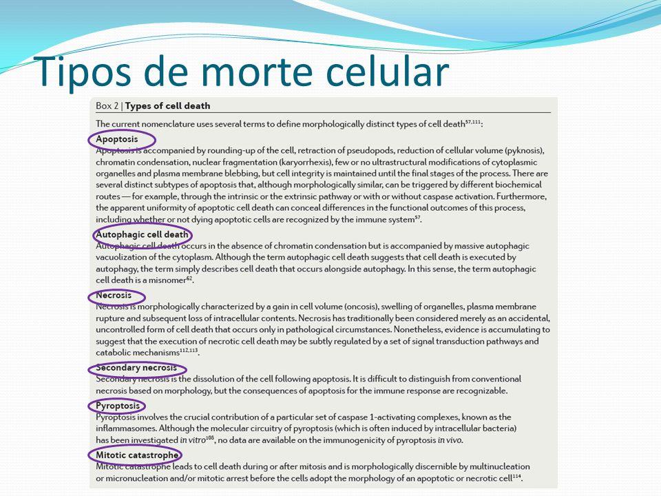 Tipos de morte celular