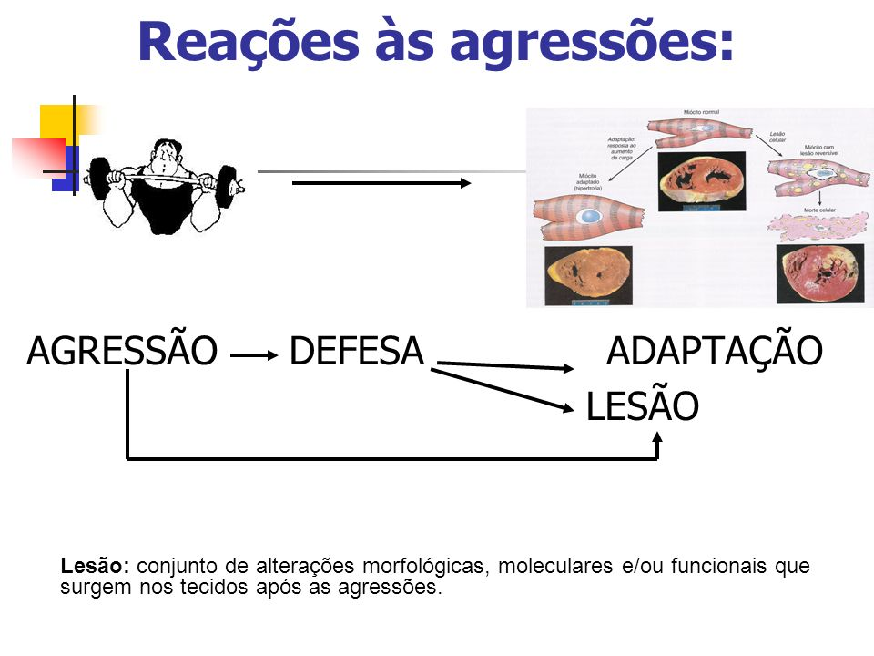 Reações às agressões: AGRESSÃO DEFESA ADAPTAÇÃO LESÃO Lesão: conjunto de alterações morfológicas, moleculares e/ou funcionais que surgem nos tecidos a