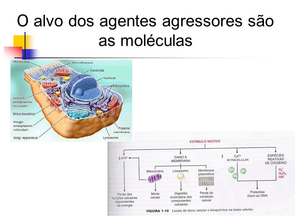 O alvo dos agentes agressores são as moléculas