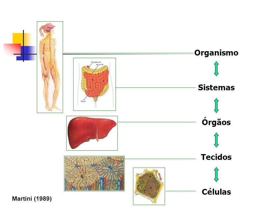 Organismo Sistemas Órgãos Tecidos Células Martini (1989)