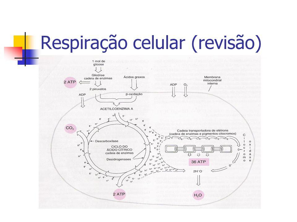 Respiração celular (revisão)
