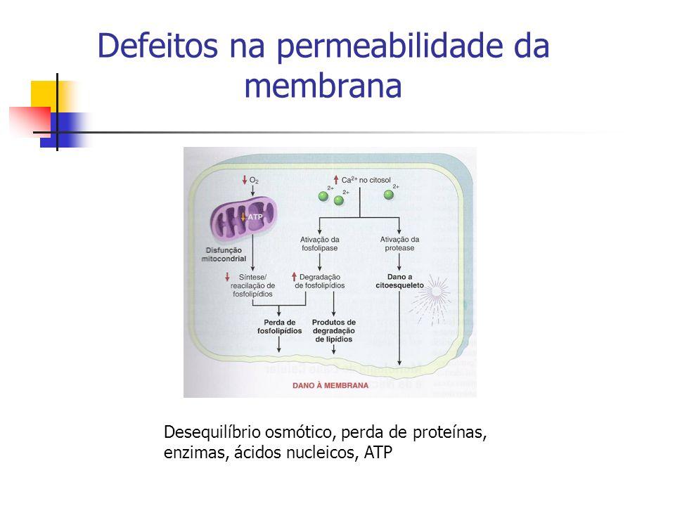 Defeitos na permeabilidade da membrana Desequilíbrio osmótico, perda de proteínas, enzimas, ácidos nucleicos, ATP