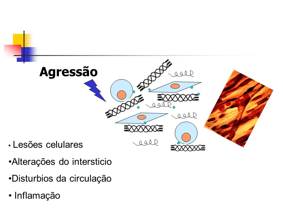 Agressão Lesões celulares Alterações do intersticio Disturbios da circulação Inflamação