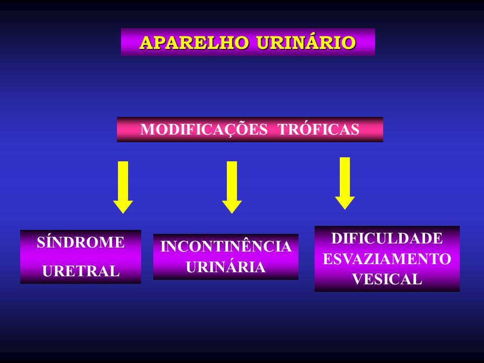 SÍNDROME URETRAL APARELHO URINÁRIO INCONTINÊNCIA URINÁRIA MODIFICAÇÕES TRÓFICAS DIFICULDADE ESVAZIAMENTO VESICAL