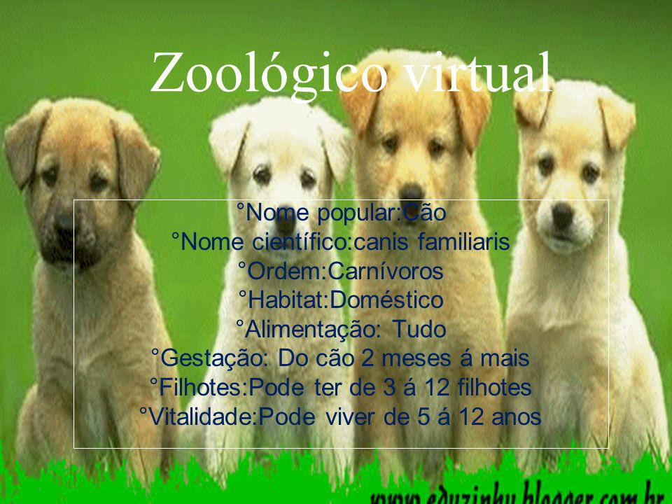 Curiosidades O cão tem o olfato e a audição bem melhor do que os humanos..